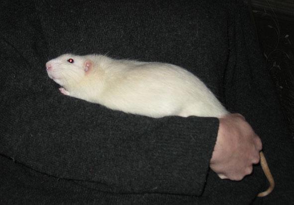 Volière pour des rats ? 101129055617380207215590