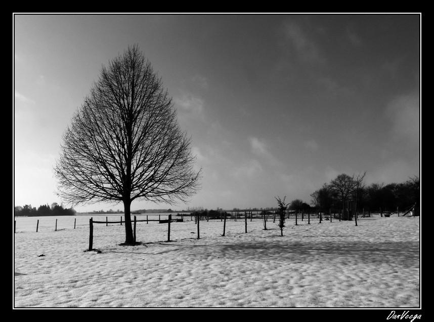 Dimanche 5 Décembre - Noir et Blanc 101205091207440187252698