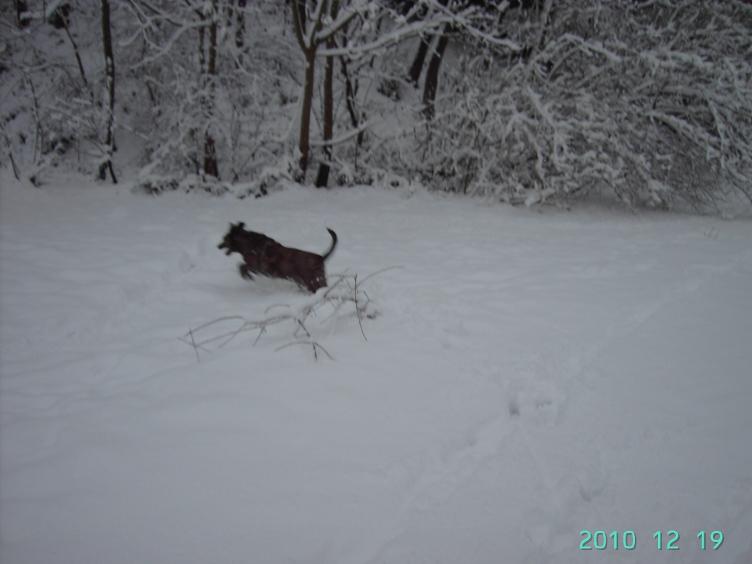 Photos de neige du coté de chez vous - Page 3 1012190532591140117336031