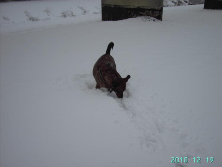 Photos de neige du coté de chez vous - Page 3 1012190533061140117336032