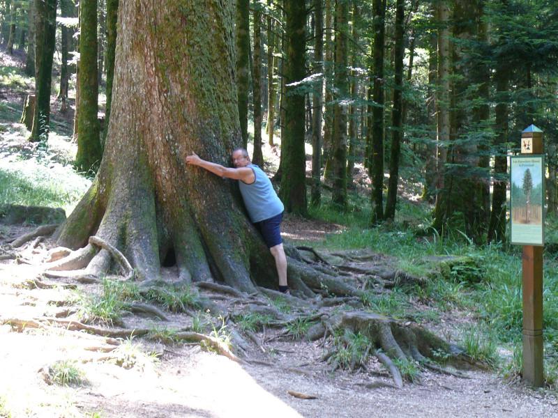 Les arbres en général - Page 2 110102060137457337403231