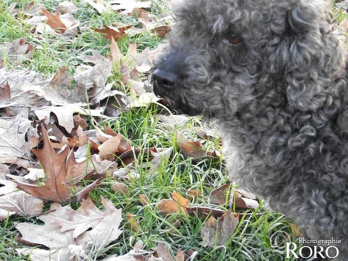 ▬ Nos (vrais) Bêtes à POils - Page 5 110108083525712247439915