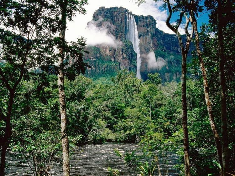 Les chutes de l'Ange - Venezuela dans PAYSAGES, NATURE  : 1101210353231066577506270