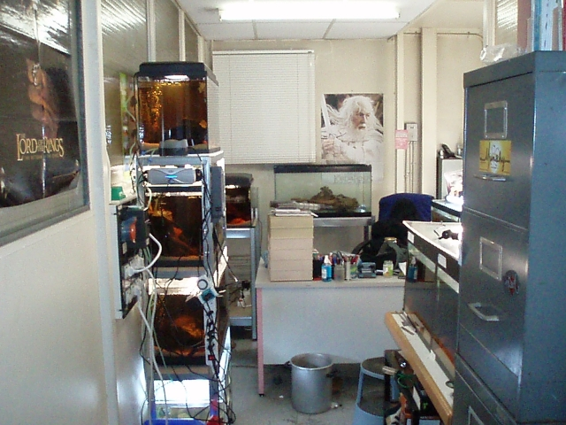 My work fish room 1102100905261220497619770