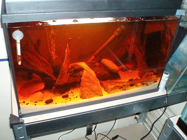 My work fish room 1102100906471220497619787
