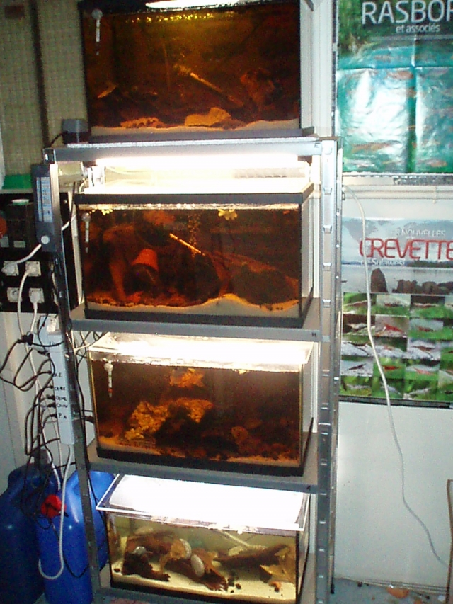 My work fish room 1102100906551220497619788