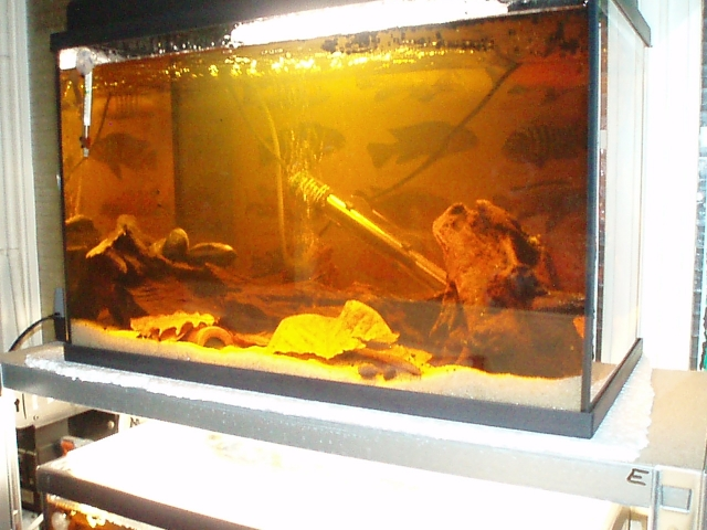 My work fish room 1102100907131220497619789
