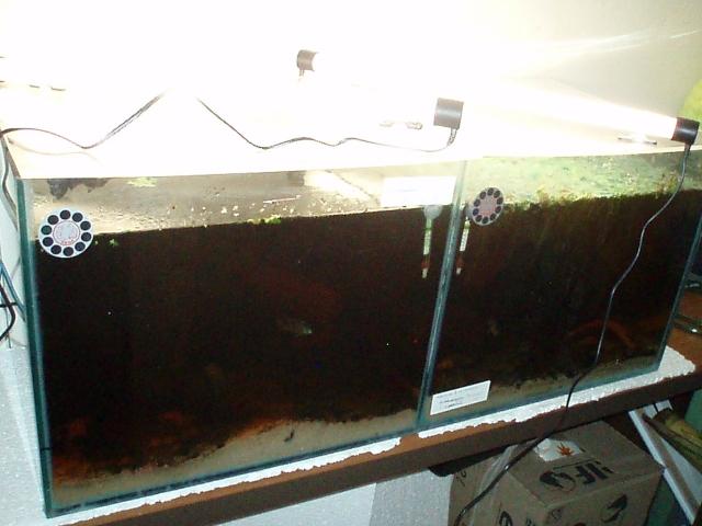 My work fish room 1102100908241220497619797
