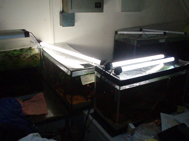 My work fish room 1102100908381220497619799