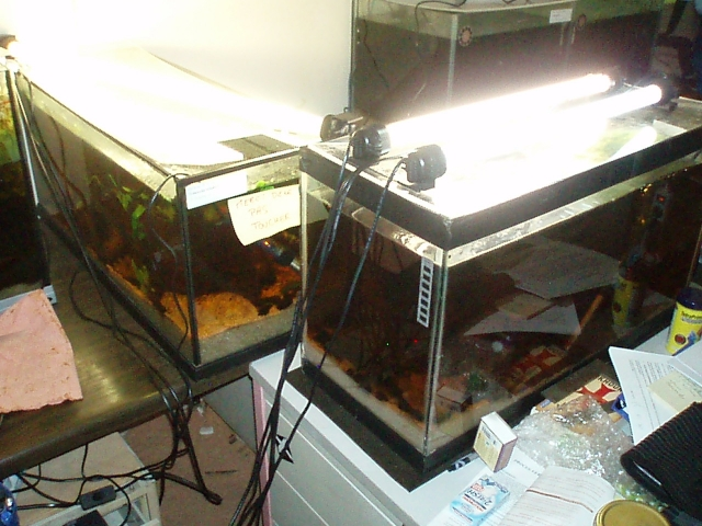 My work fish room 1102100908511220497619800
