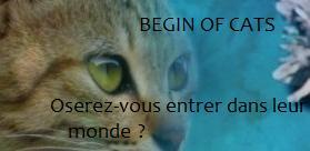 Begin Of Cats 1103040241171101577756209