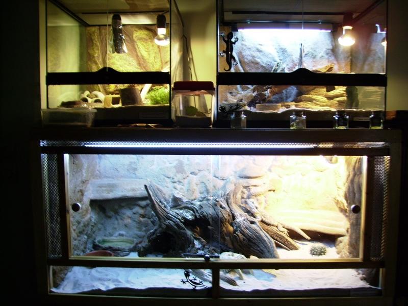 photo idee deco terrarium pogona
