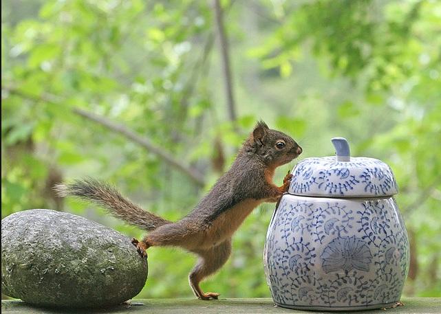 Petit curieux ! dans MONDE ANIMAL : 1103131059581066577807446
