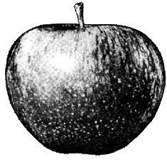 Apple : Le logo d'Apple (Paul McCartney) récupèrer par Apple (Steven Paul Jobs) 1103141040111200807819564