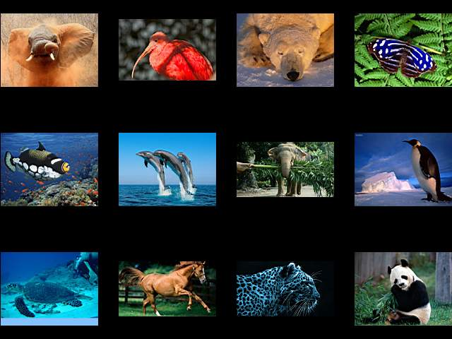 100 FullHd Animaux Wallpapers 1920x1080 [FS]