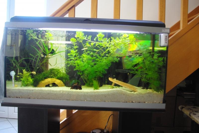 idée déco aquarium 100l