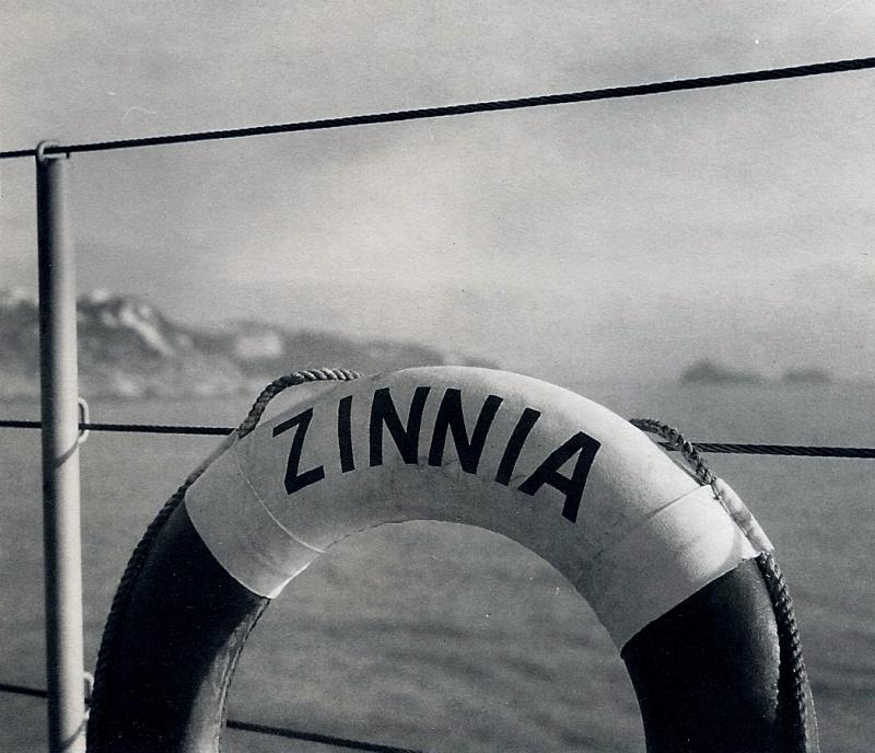 Pour tous les amoureux du ZINNIA , quelques photos de Martin 110406062725912947949369