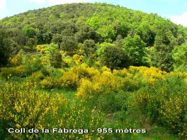 Coll de la Fàbrega - ES-GI-0950