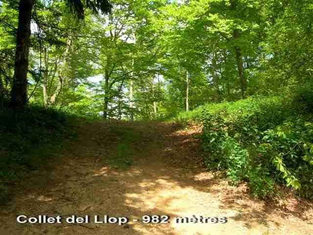 Collet del Llop - ES-GI- 982 mètres
