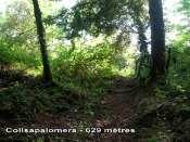 Collsapalomera - ES-B- 629 mètres