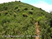 Coll d'Agramunt - ES-B-0657