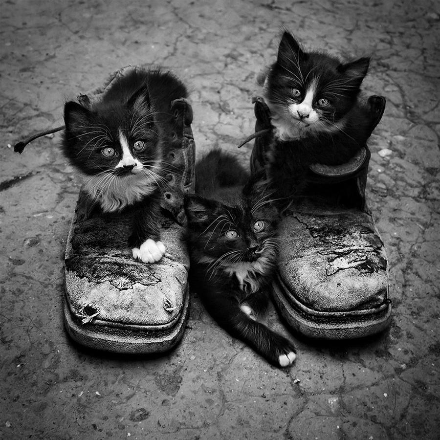 photos en noir et blanc - Page 4 1105230709431066578204691