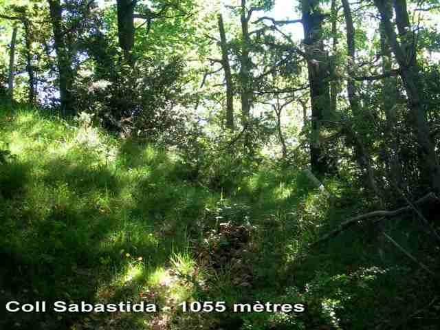 Coll Sabastida - ES-B-1055