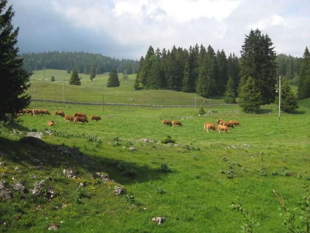 Cuvaloup de Crans (Vaud) 110603090138185828262845