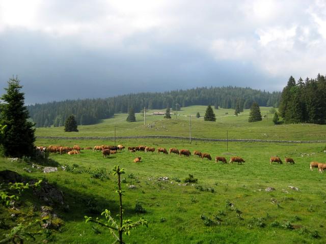 Cuvaloup de Crans (Vaud) 110603090138185828262846