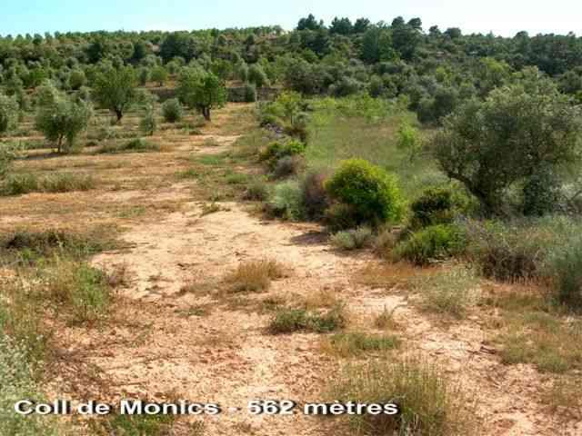 Coll de Monics - ES-L- 562 mètres
