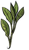 Blog de lagraineindocile : La Graine Indocile, Soigner les plantes par les plantes