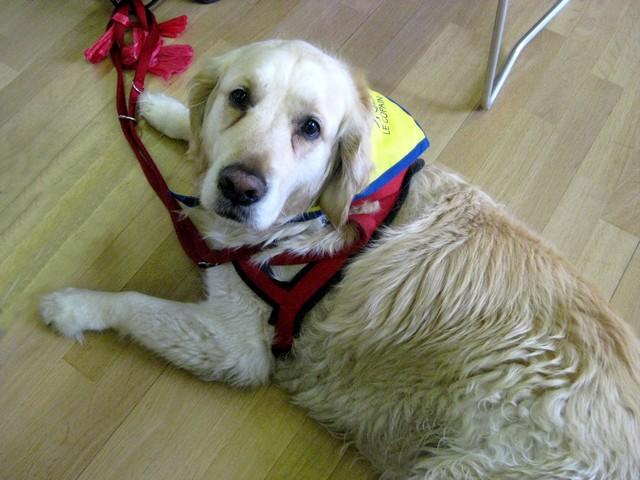 2011 : Remise des chiens d'assistance 110618054852185828343081