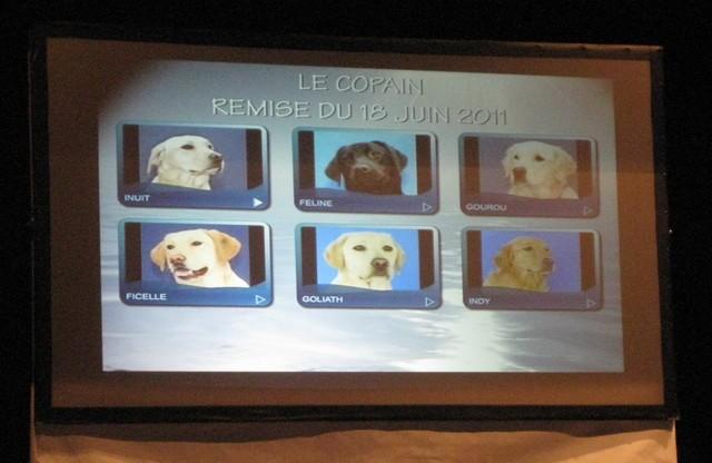 2011 : Remise des chiens d'assistance 110618054852185828343082
