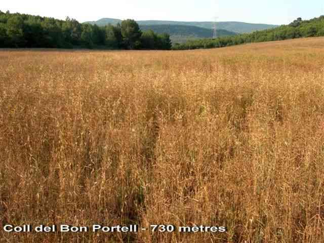 Coll del Bon Portell - ES-B-0730b