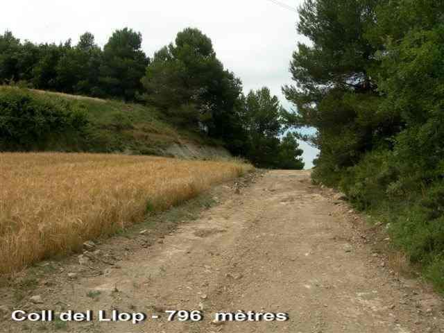 Coll del Llop - ES-B- 799 mètres
