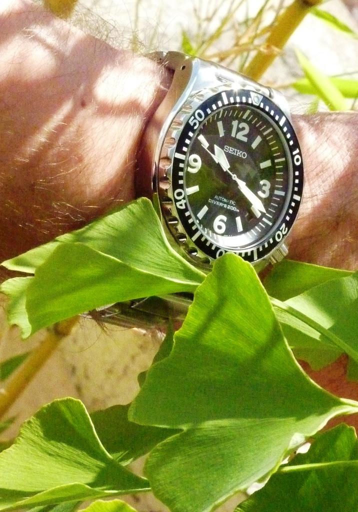 Les montres au meilleur rapport qualité/prix - Page 5 110701103753990898408124