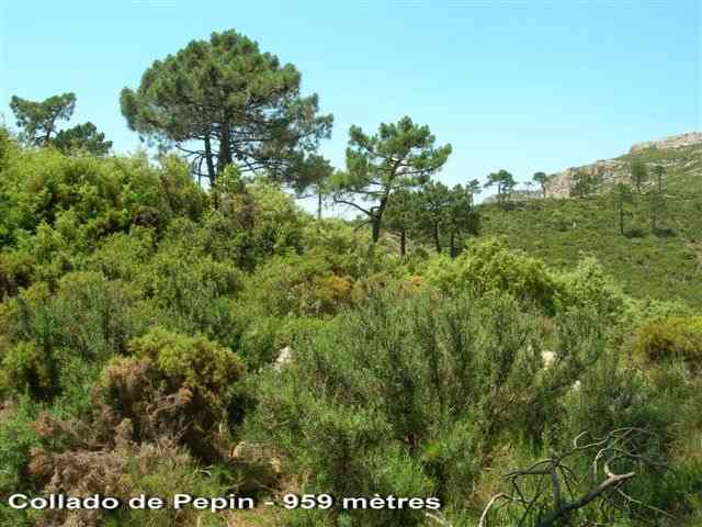 Collado de Pepin - ES-V- 959 mètres