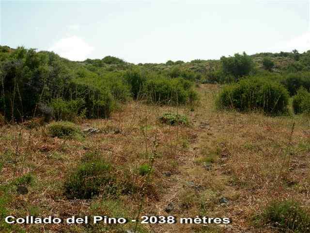 Collado del Pino - ES-GR- 2038 mètres