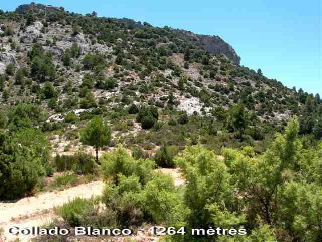 Collado Blanco - ES-MU- 1264 mètres