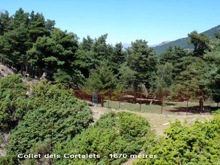 Collet dels Cortalets - ES-L-1670b