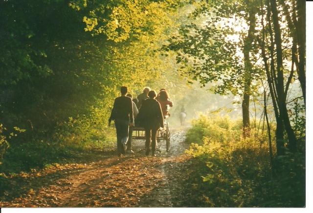Thème d'Octobre : les Chevaux et les Couleurs d'Automne - Page 4 1109181033061052978758485