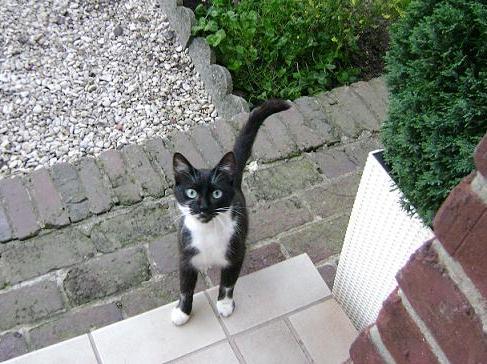 la maison des chats de valenciennes le forum besoin d 39 aide pour jolie chatte noire et. Black Bedroom Furniture Sets. Home Design Ideas