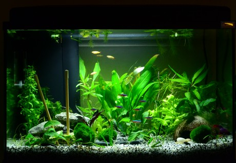 décoration aquarium 55l