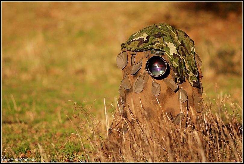 Affût, photographe animalier