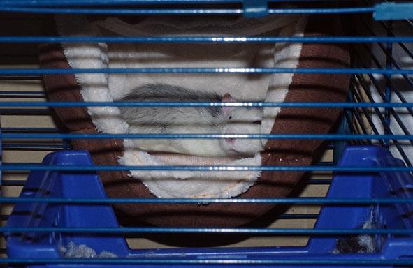 dodobrun-(2)