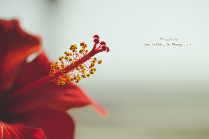 fleur 14