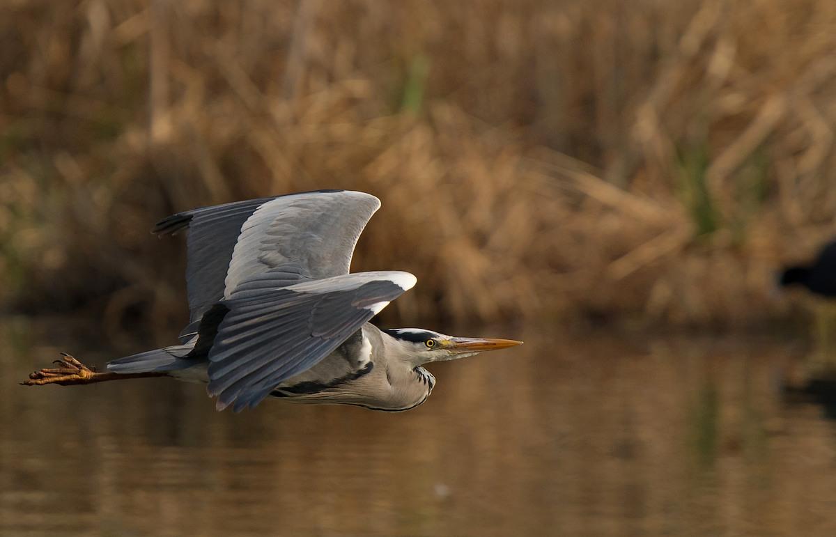 Parc de la Woluwe (oiseaux photos) 120403032424568519668336