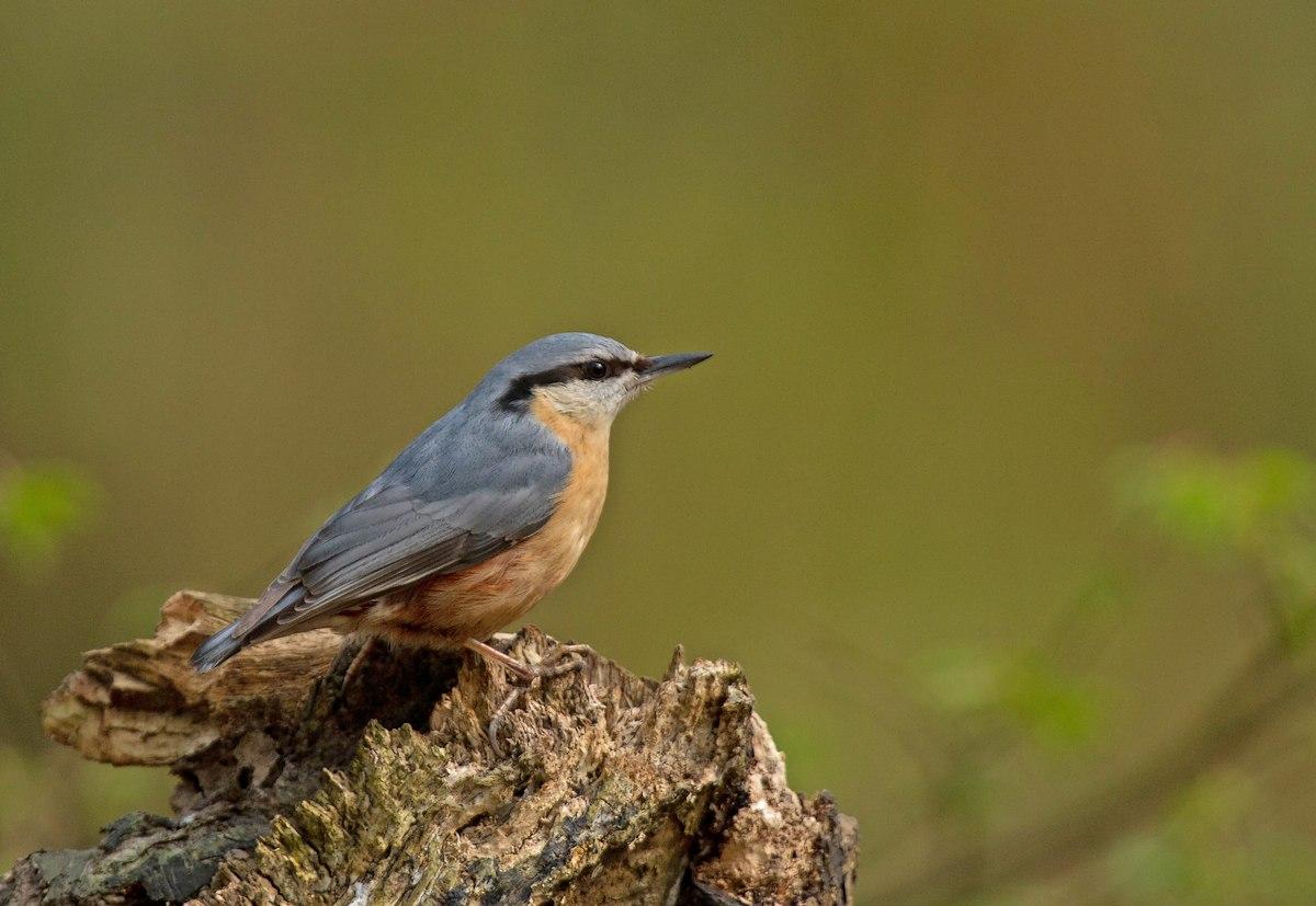 Parc de la Woluwe (oiseaux photos) 120403032425568519668338