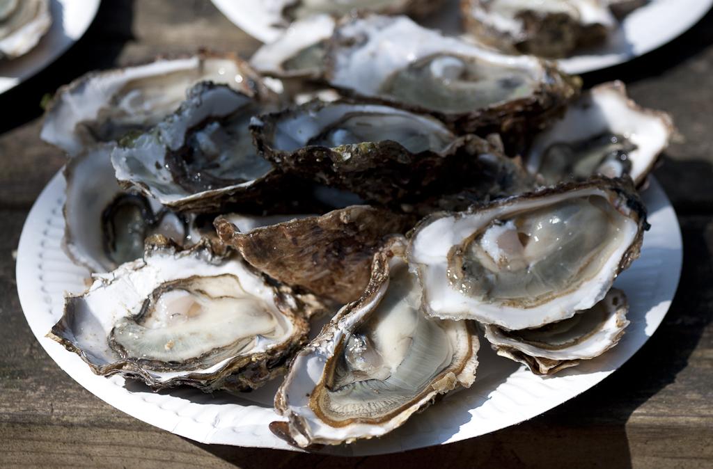 Photos de la rencontre sortie anniversaire 2012 sur l'Île d'Oléron - Page 4 1204030839411476619669712