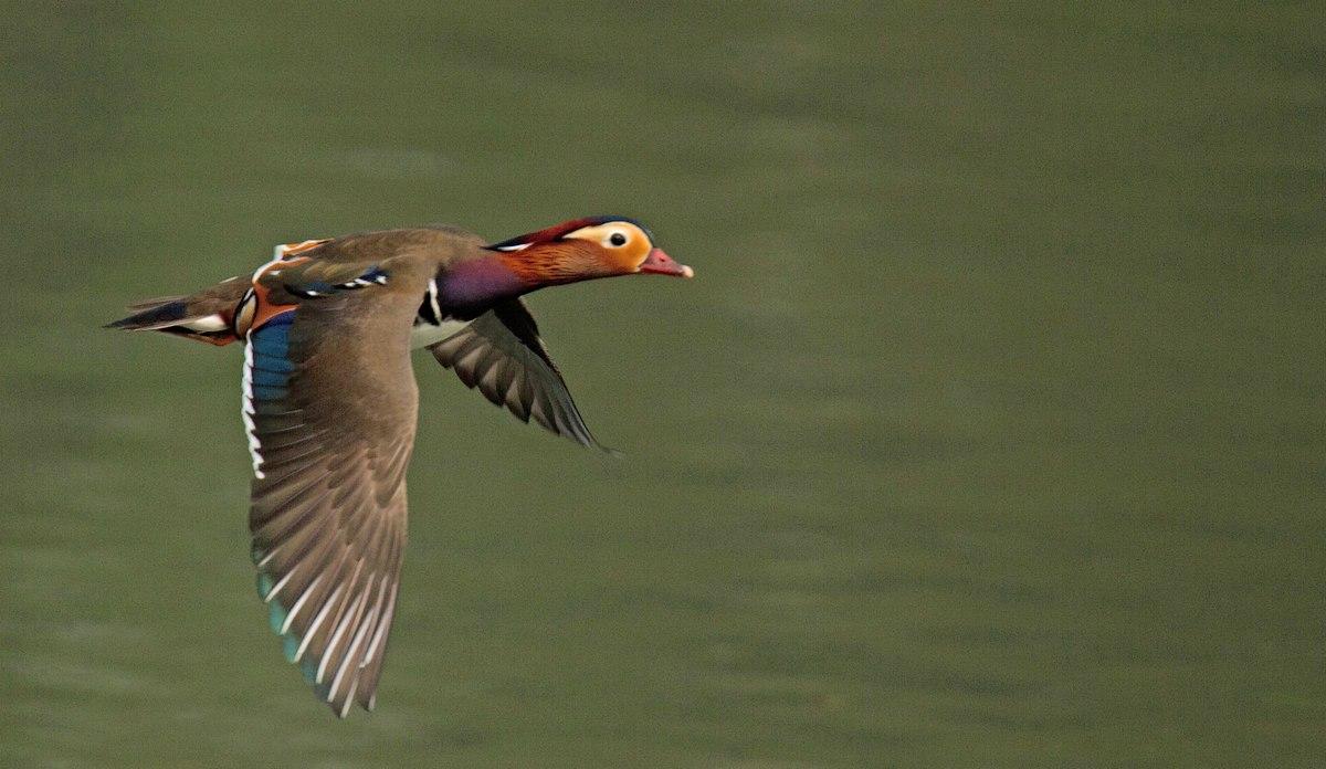 Trafic aérien au-dessus des étangs de Tervuren (photos) 120414041132568519717489